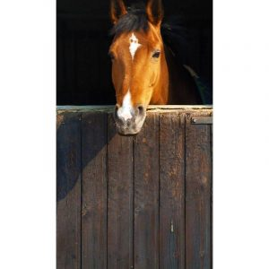 Deurposter Paard Staldeur