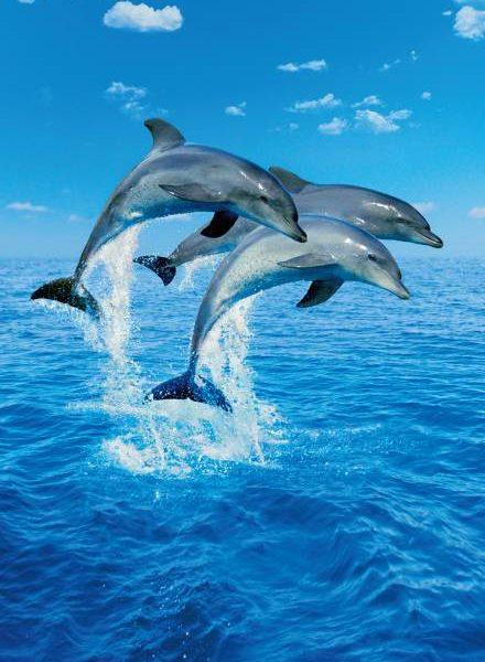 Deurposter Springende Dolfijnen