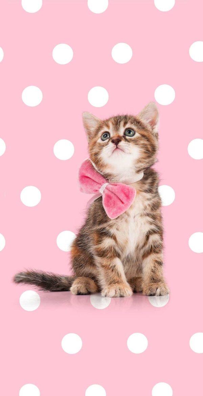 Good Morning Kids Strandlaken Sweet Cat